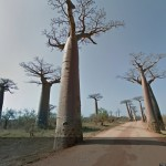 Google Street View: Straße mit Affenbrotbäumen in Madagaskar